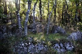 Forêt sainte-Baume