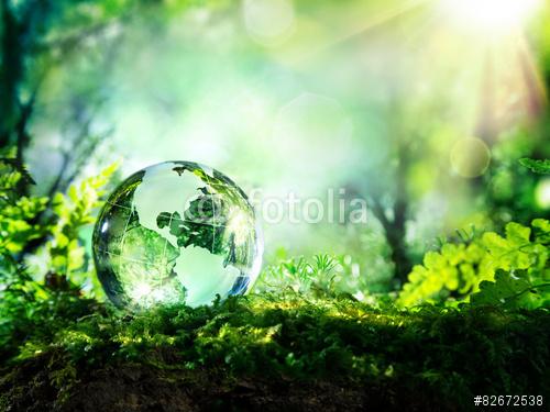 La forêt amazonienne Green peace,