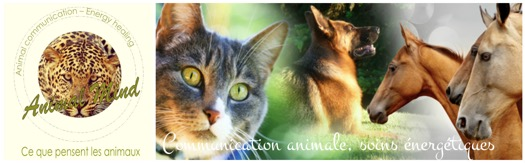 communication-animale