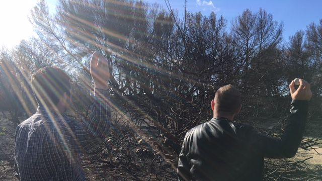Bombes à graines: comment redonner vie à la terre après les incendies dans les Bouches-du-Rhône