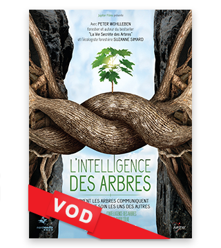 "Film : ""L'intelligence des arbres"""